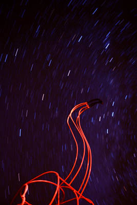 Photograph - Flamingo Sky by Emily Stauring