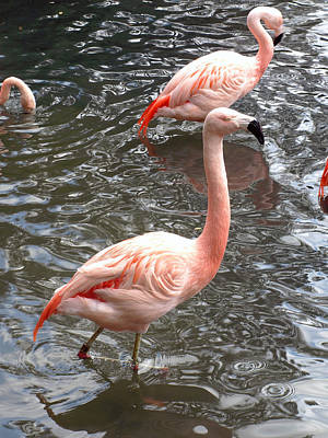 Thomas Kinkade Rights Managed Images - Flamingos Wading Through the Water Royalty-Free Image by Jessica Foster