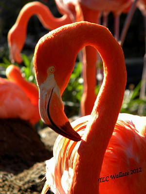 Photograph - Flamingo by Tammy Wallace
