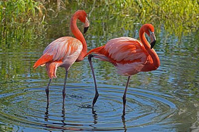 Photograph - Flamingos 2 by Dragan Kudjerski