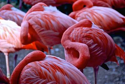 Photograph - Flamingos At Ease by Eric Tressler