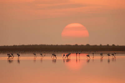 Water Reflections Photograph - Flamingos At Sunrise by Joan Gil Raga