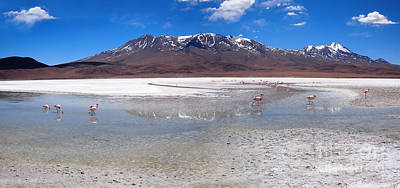 Photograph - Flamingos At The Altiplano In A Salt Lake by IPics Photography