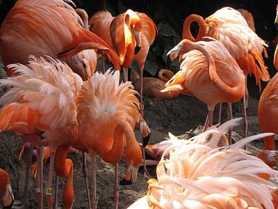 Flamingos Print by Beth Vincent