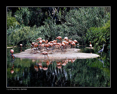 Flamingos Colony Art Print by Pedro L Gili
