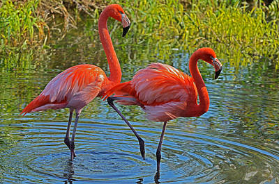 Photograph - Flamingos by Dragan Kudjerski