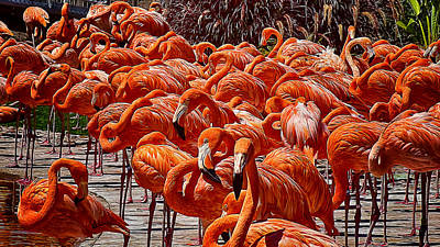 Photograph - Flamingos Flamingos Flamingos by Wayne Wood