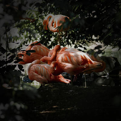 Photograph - Flamingos Gathering 2 by Ernie Echols