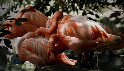 Photograph - Flamingos Gathering by Ernie Echols