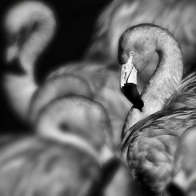 Photograph - Flamingos  by Gigi Ebert