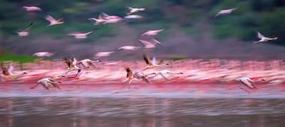Flamingos In Dawn Art Print