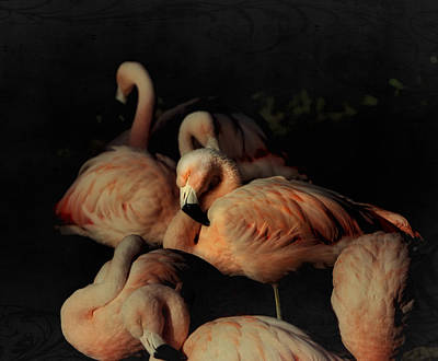 Flamingos In Repose Art Print