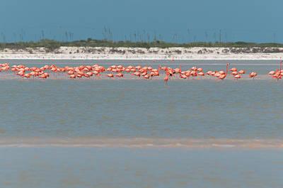 Digital Art - Flamingos In Rio Lagartos by Carol Ailles