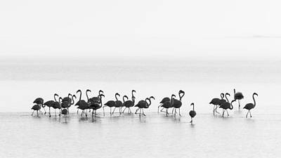 Flamingos Art Print by Joan Gil Raga