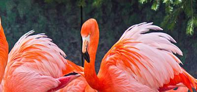 Photograph - Flamingos by Jonny D