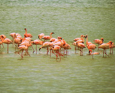 Photograph - Flamingos by Ramona Johnston