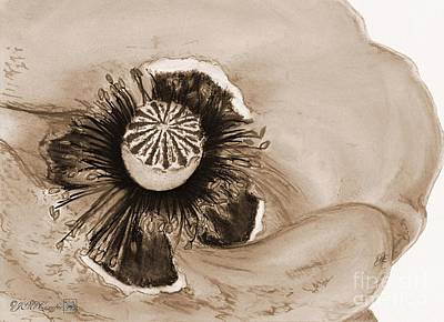 Drawing - Flanders Poppy by J McCombie