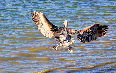 Photograph - Flaps Up And Gear Down by AJ  Schibig
