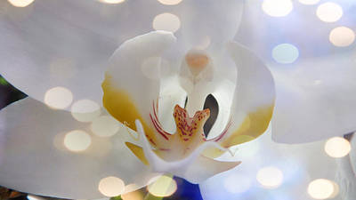 Photograph - The Flashing Orchid by Xueyin Chen