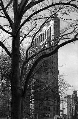 Photograph - New York Photography - Flatiron With Tree by Dave Beckerman
