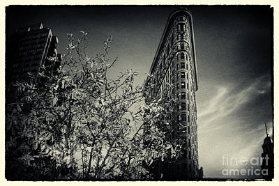 New York City Photograph - Flat Iron Building And A Magnolia Tree New York City by Sabine Jacobs