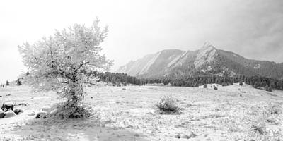 Flatirons Tree - Winter Art Print by Aaron Spong