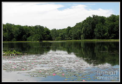 Photograph - Flattail Lake At Reinstein Woods by Rose Santuci-Sofranko