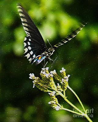 Flattering Flutter Art Print