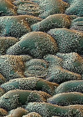 Flax Leaf Stomata Art Print by Stefan Diller