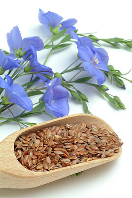 Linus Wall Art - Photograph - Flax Seeds And Flowers by Bildagentur-online/th Foto/science Photo Library