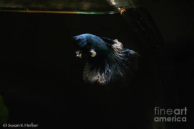 Photograph - Fleabag  by Susan Herber