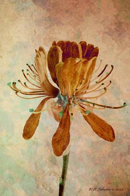 Photograph - Fleur De Danse by WB Johnston