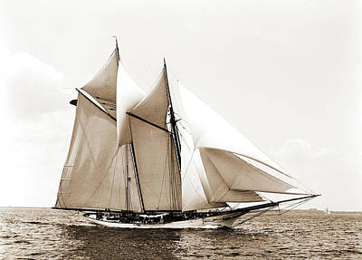 Fleur De Lis Drawing - Fleur-de-lis, Fleur-de-lis Yacht, Yachts by Litz Collection