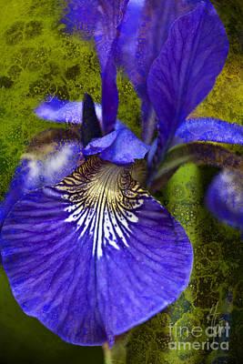 Fleur De Lis Photograph - Fleur-de-lis by Heiko Koehrer-Wagner