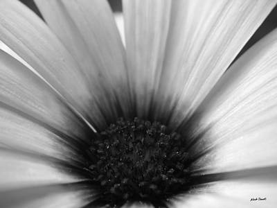 Photograph - Fleur by Nicole Daniels