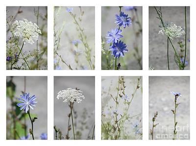 Photograph - Fleurs Sauvages by France Laliberte