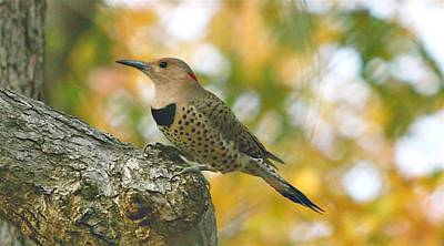 Flicker Art Print by Debbie Sikes