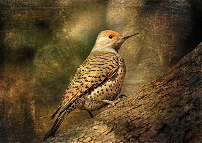 Woodpecker Photograph - Flicker In A Tree by Donna Kennedy