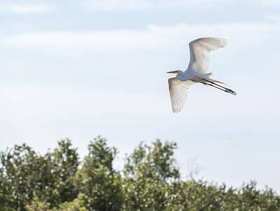 Heron Photograph - Flied Great White Heron by Alex Potemkin