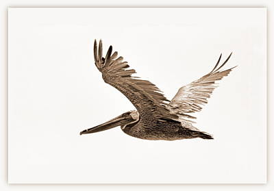 Photograph - Flight by AJ  Schibig