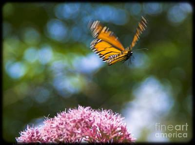 Photograph - Flight by Alana Ranney