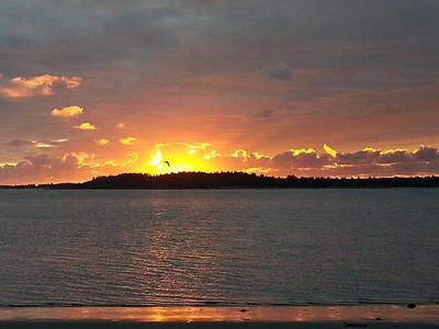 Photograph - Flight At Sunset by Suzy Piatt