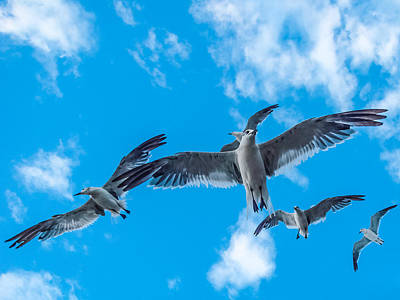 Photograph - Flight by CarolLMiller Photography