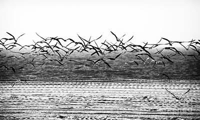 Flight Art Print by John Rizzuto