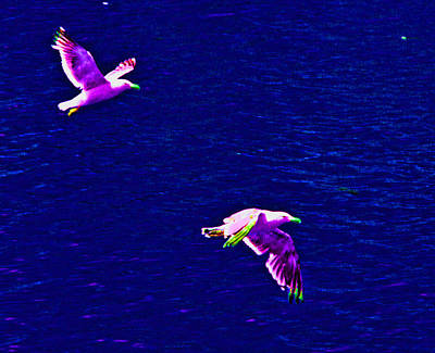 Photograph - Flight by Joseph Coulombe