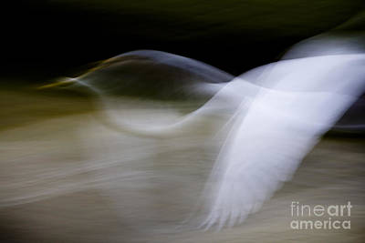 Flight Of Fancy Art Print by Anne Rodkin