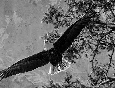 Photograph - Flight Of Freedom by Jordan Blackstone