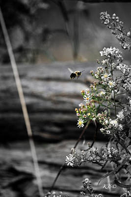 Photograph - Flight Of The Bee by Kathy J Snow
