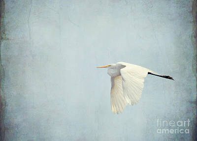 Photograph - Flight Of The Egret 2  by Kerri Farley