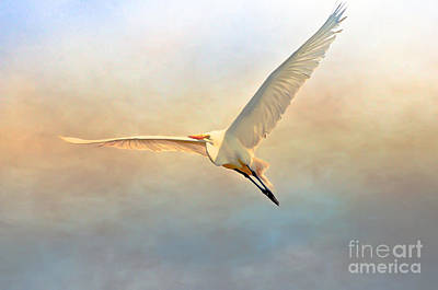 Photograph - Flight Of The Egret by Kerri Farley
